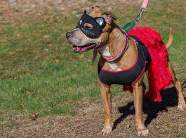 Costume Pet Parade