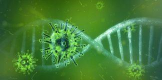 coronavirus -