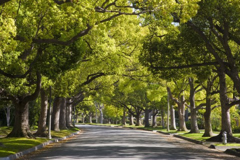 forest trees woods neighborhood.
