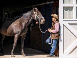 Princeton Photo Workshop: NEW! Horses & Foliage